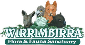 Wirrimbirra Sanctuary - Accommodation Brisbane