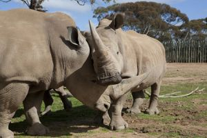 Monarto Zoo - Accommodation Brisbane
