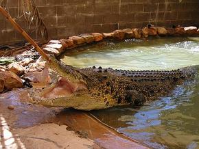 Wyndham Zoological Gardens and Crocodile Park - Accommodation Brisbane