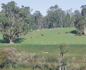 Scenic Drives - Bunbury Collie Donnybrook - Accommodation Brisbane