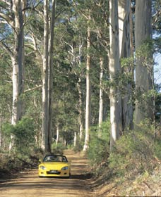 Mount Shadforth Scenic Drive - Accommodation Brisbane