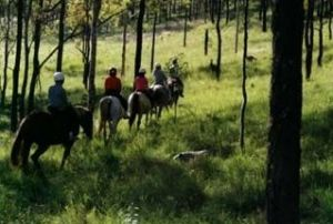 Hunter Valley Horse Riding and Adventures - Accommodation Brisbane